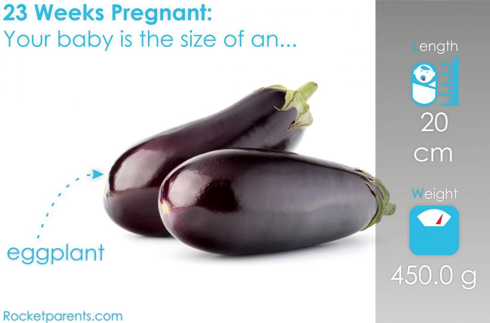 23 Weeks Pregnant Baby Size